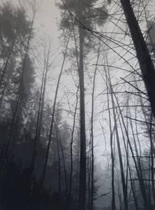 Waldstück,Jacquardgewebe, 2018, 180x130 cm